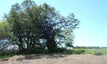 Xxx Nelson Drive, Wanamingo MN 55983 - Photo 1