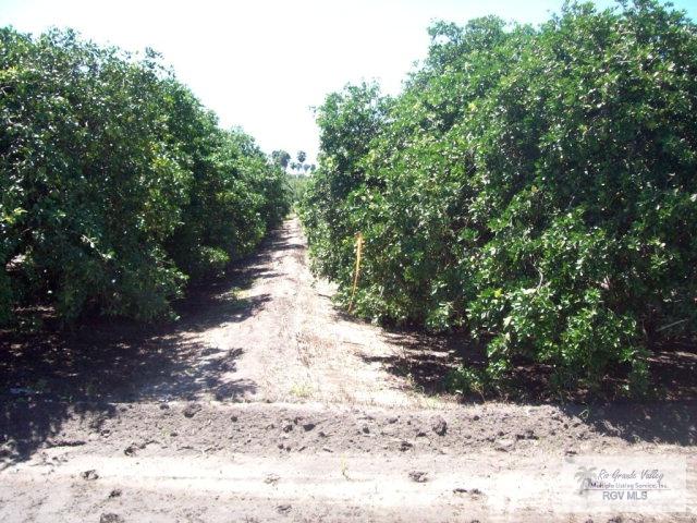 Tbd N White Ranch Rd., La Feria TX 78559 - Photo 1