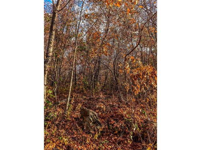 9999 Ox Creek Road, Weaverville NC 28787 - Photo 2