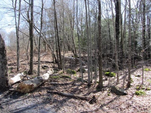Big Woods Road, Harris NY 12742