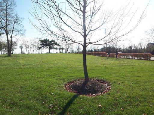 Lot 2 Central Road, Hoffman Estates IL 60195 - Photo 2