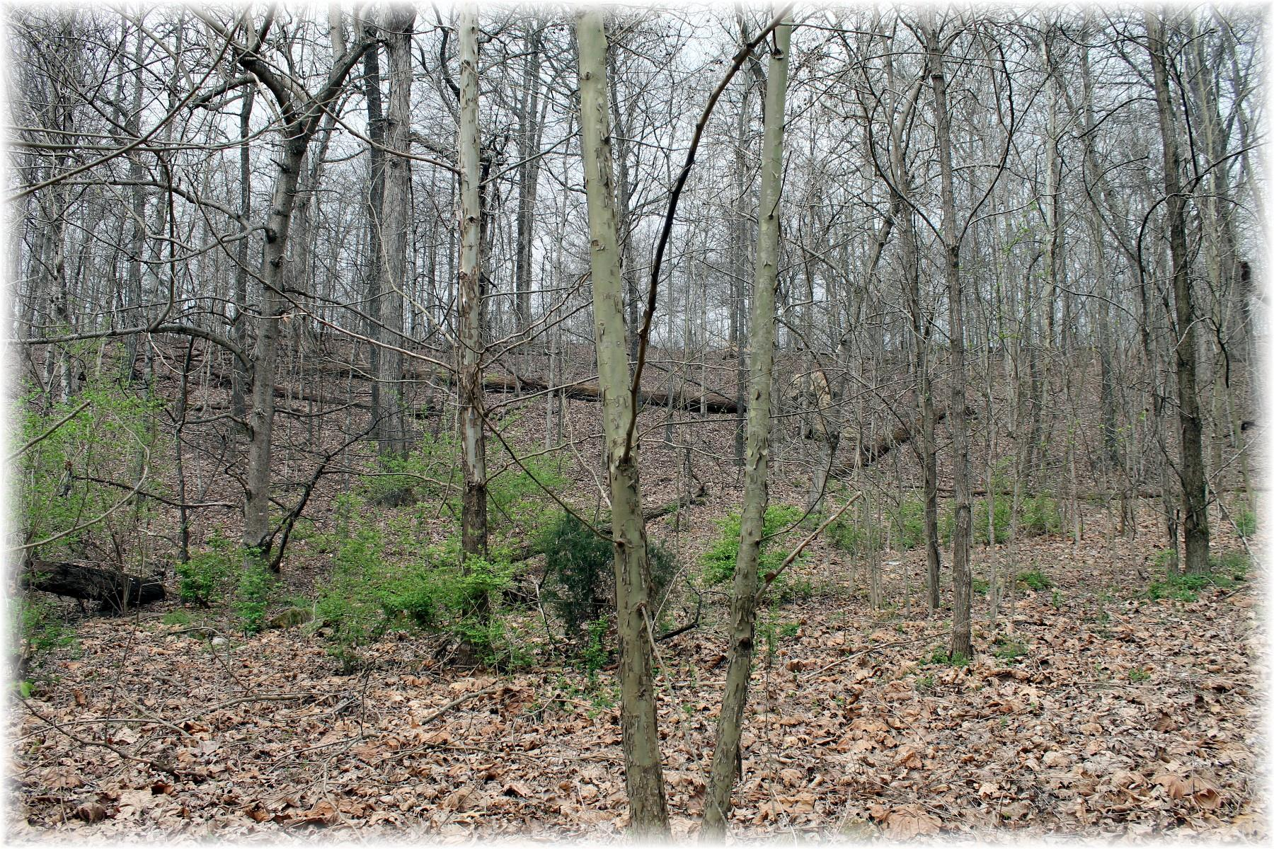 8000 Old Harding Pike, Nashville TN 37221 - Photo 1