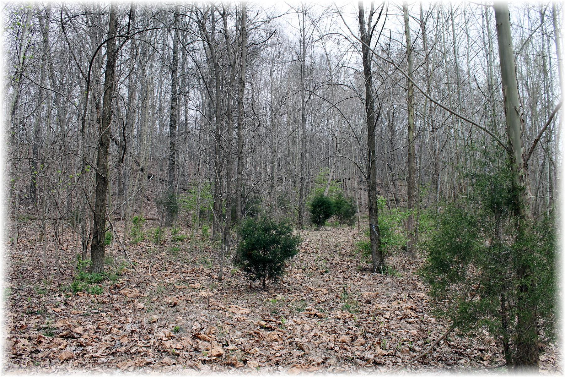 8000 Old Harding Pike, Nashville TN 37221 - Photo 2