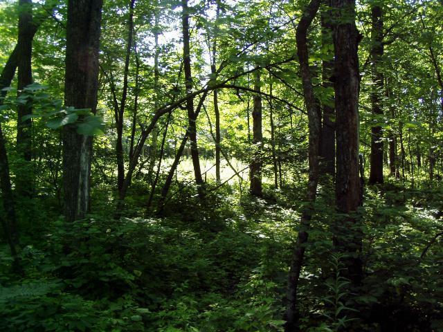 Lot 8 Blk 1 Falling Leaf Trail, Park Rapids MN 56470 - Photo 1