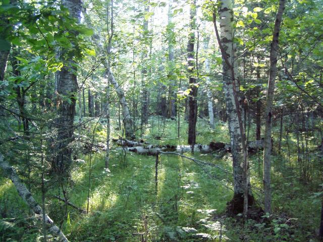 Lot 8 Blk 1 Falling Leaf Trail, Park Rapids MN 56470 - Photo 2