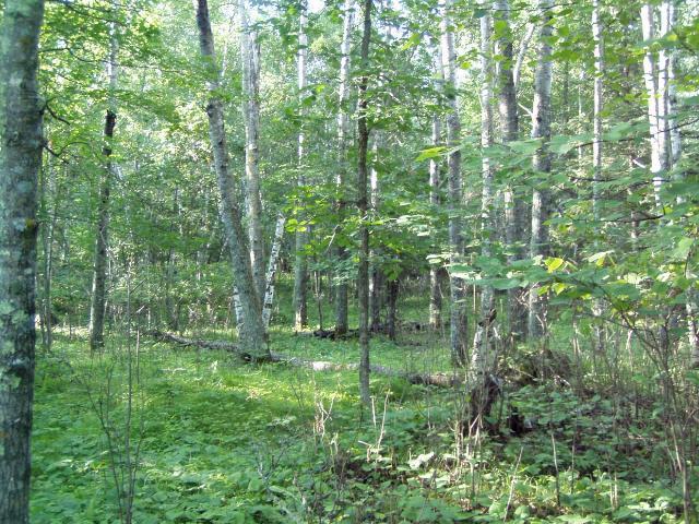 Lot 9 Blk 1 Falliong Leaf Trail, Park Rapids MN 56470 - Photo 1