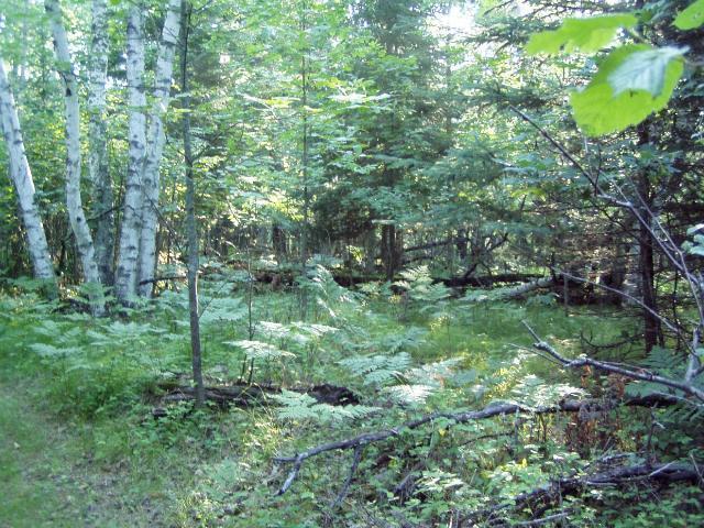 Lot 9 Blk 1 Falliong Leaf Trail, Park Rapids MN 56470 - Photo 2