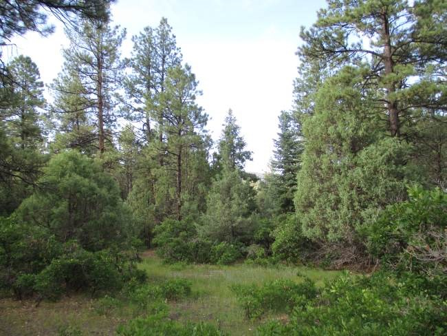 Lot 5, Block 3, Brazos Meadows, Chama NM 87520 - Photo 1
