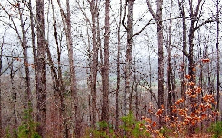 Lt 65 Timberline Acres, Young Harris GA 30582 - Photo 2