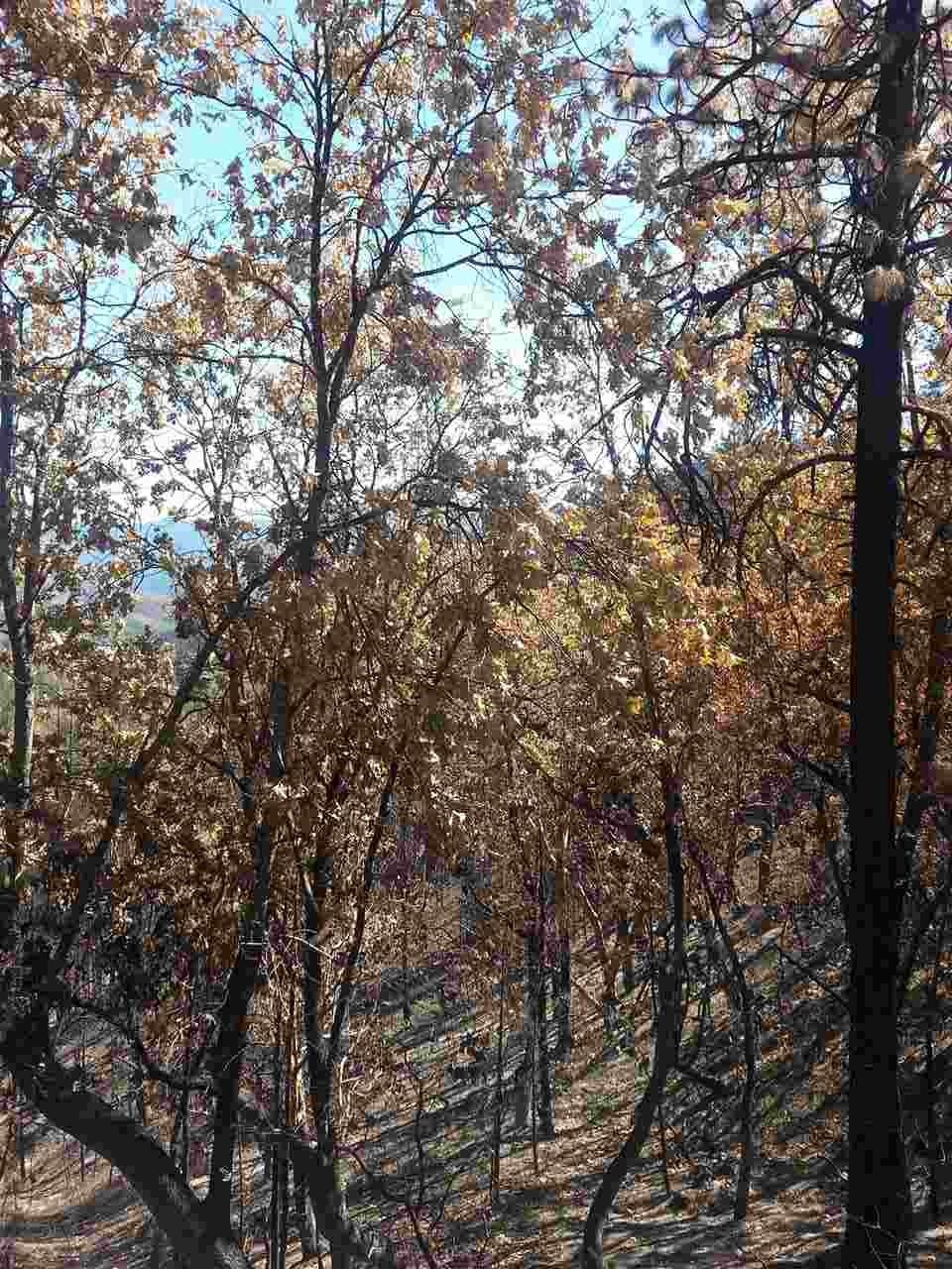Middle Creek Road, Klamath River CA 96050 - Photo 2