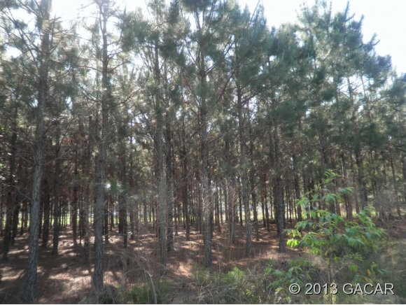 00 Wester Drive, High Springs FL 32643 - Photo 1