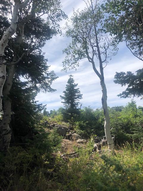 Whispering Pines Lot #22, Virgin UT 84779