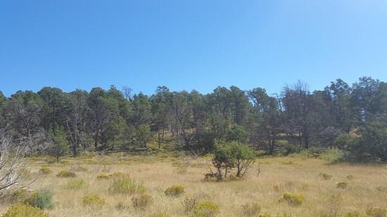 #1 Pinon Ridge Road, Ruidoso Downs NM 88346 - Photo 1