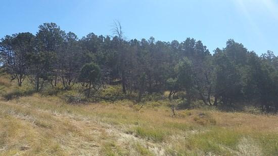#1 Pinon Ridge Road, Ruidoso Downs NM 88346 - Photo 2