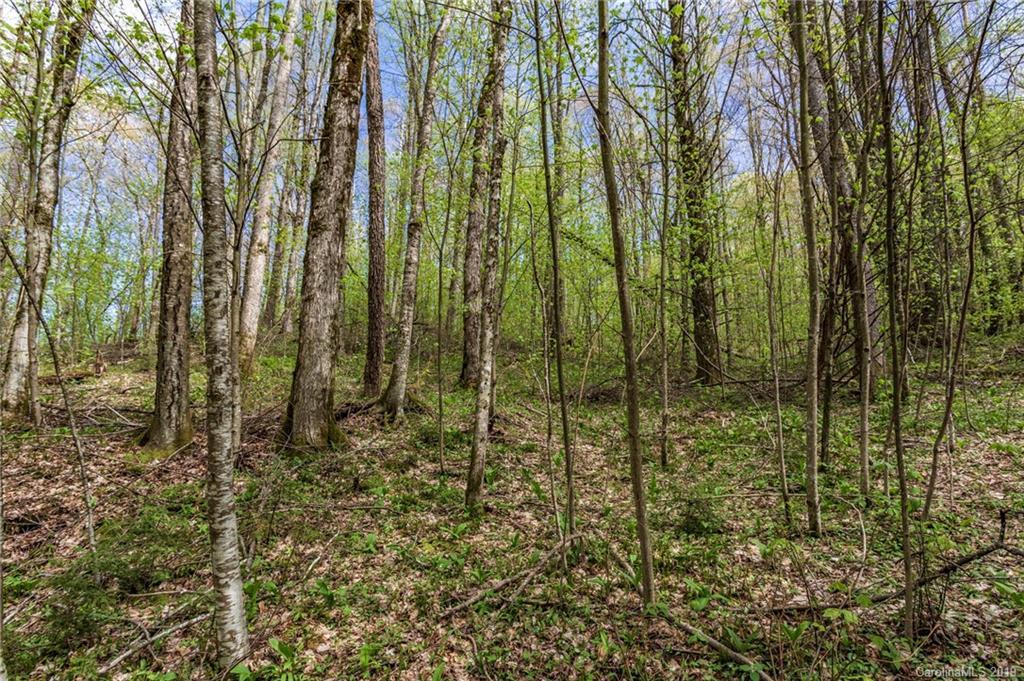 Lot 64 Big Springs Trail # -64, Qualla NC 28719 - Photo 2