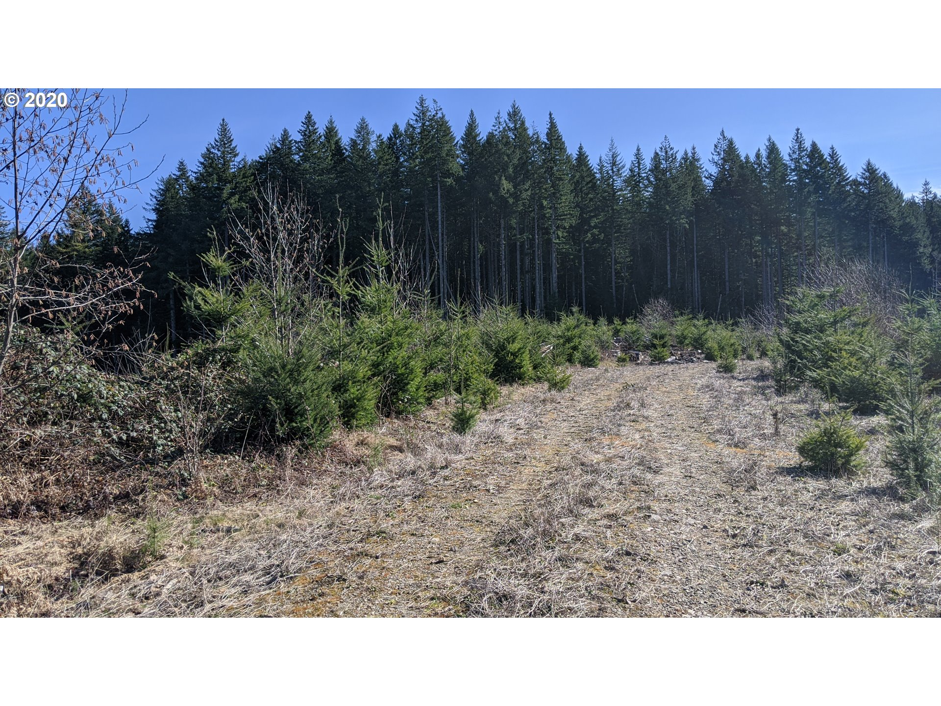 43161 E Haines Rd, Corbett OR 97019 - Photo 2